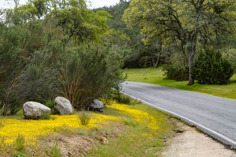 Highway 146 to Pinnacles National Park west entrance