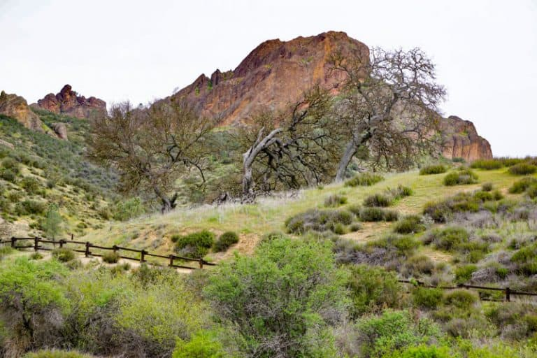 Pinnacles National Park California USA