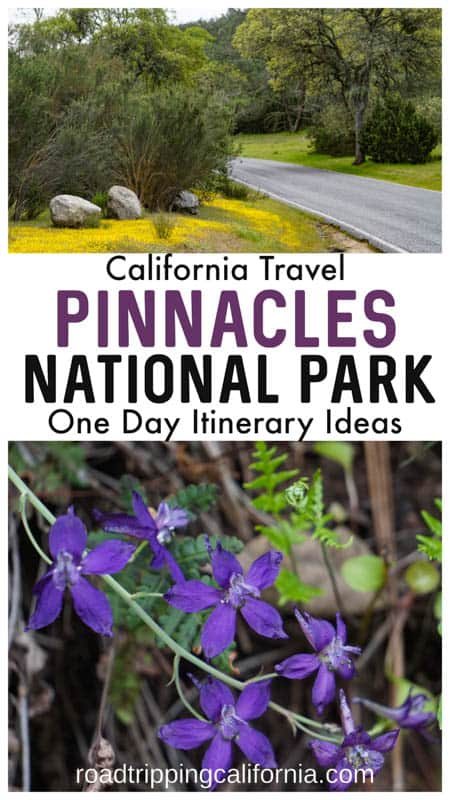 Itinerary suggestions for spending one perfect day in Pinnacles National Park in California: hike, explore a cave, observe flora and fauna, and enjoy the views.