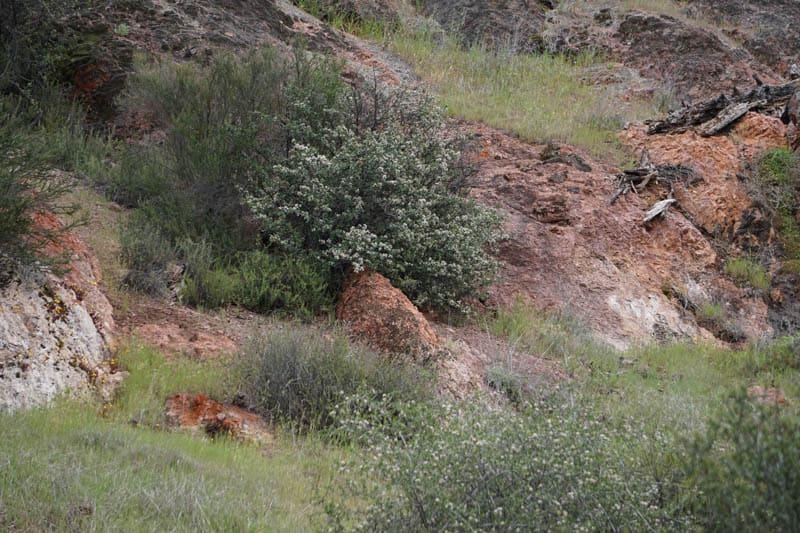 Rock faces Pinnacles NP California