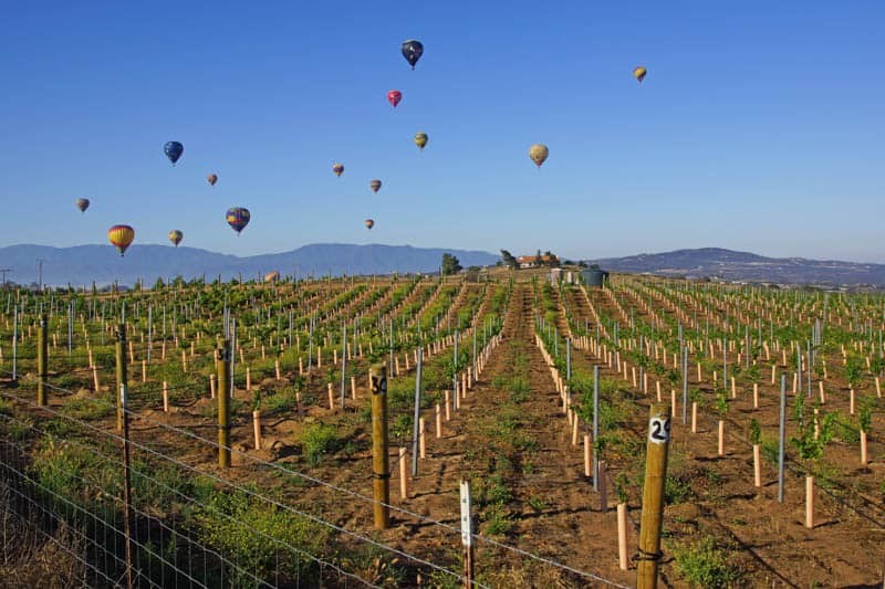 Balloons in Temecula Valley California