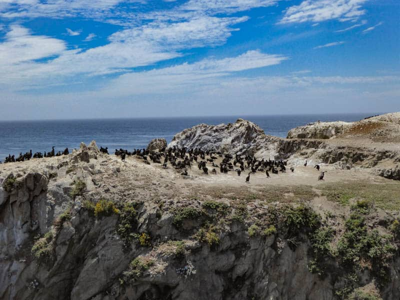 Bird Island Point Lobos State Reserve Carmel