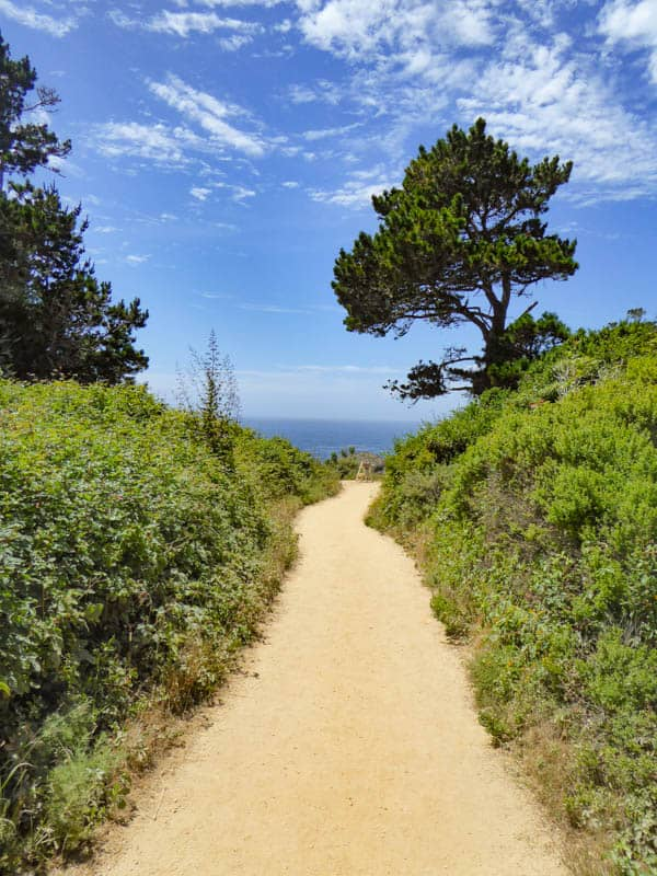 Bird Island Trail Point Lobos Carmel California