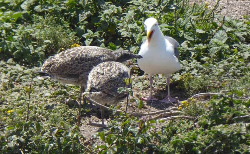 Birds on Bird Island Point Lobos Carmel California