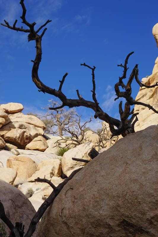 Boulders on Barker Dam Trail in Joshua Tree NP