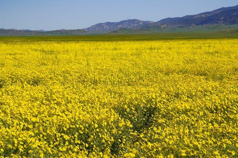 Carrizo Plain National Monument California USA