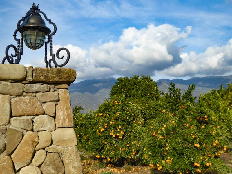 Citrus Orchard in Ojai California