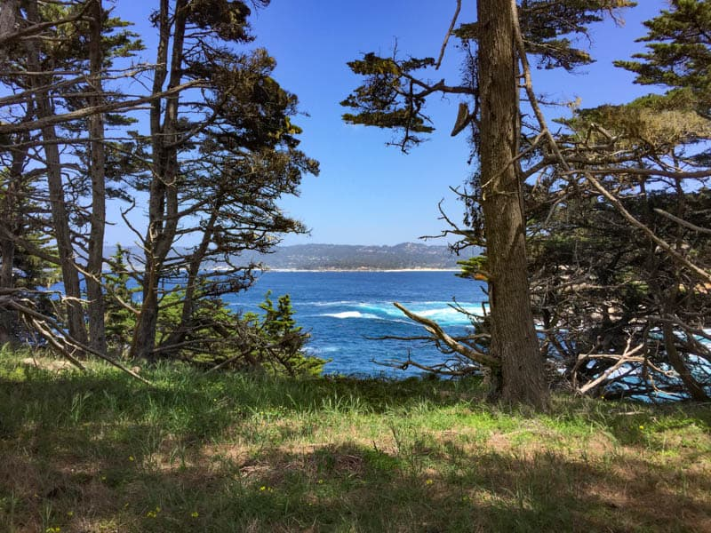 Cypress Grove Trail Point Lobos Carmel California