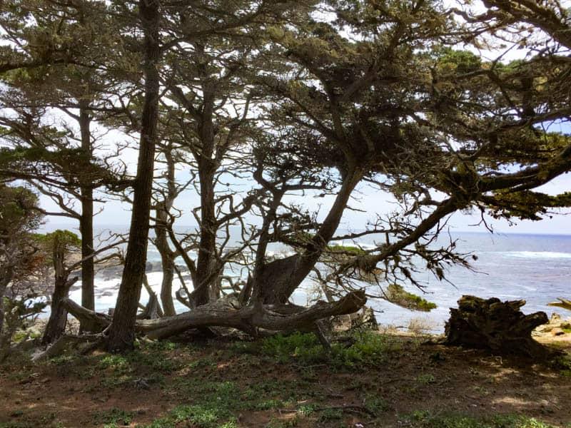 Cypress Grove Trail Point Lobos State Reserve Carmel
