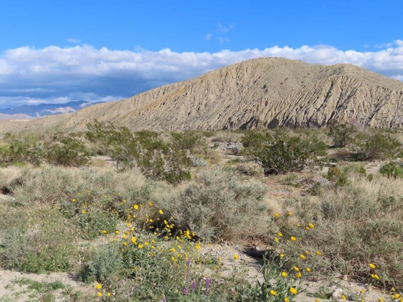 Desert near Palm Springs California