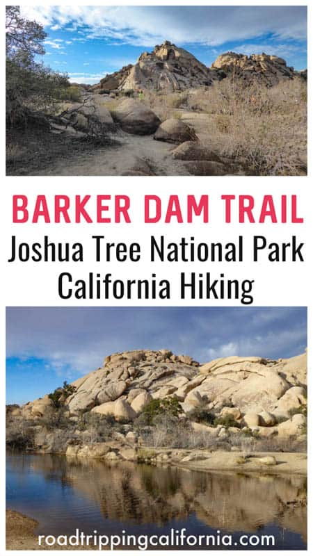 Discover what to expect on the short and scenic Barker Dam Nature Trail in Joshua Tree National Park in Southern California. Plus tips for hiking the popular trail!