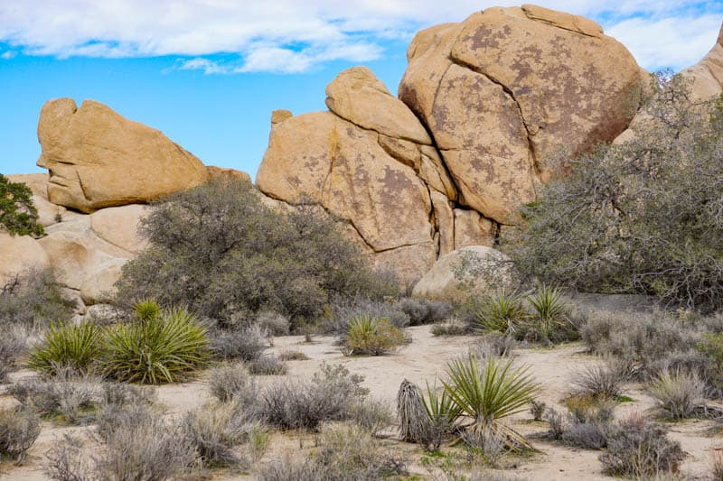 Joshua Tree NP Southern California USA