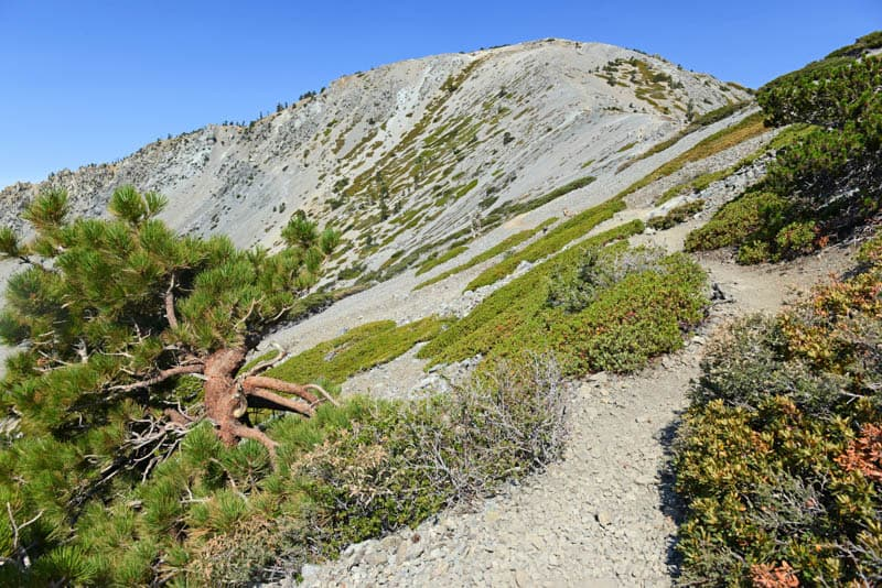 Hike Mt. Baldy in the San Gabriel Mountains on a day trip from Los Angeles