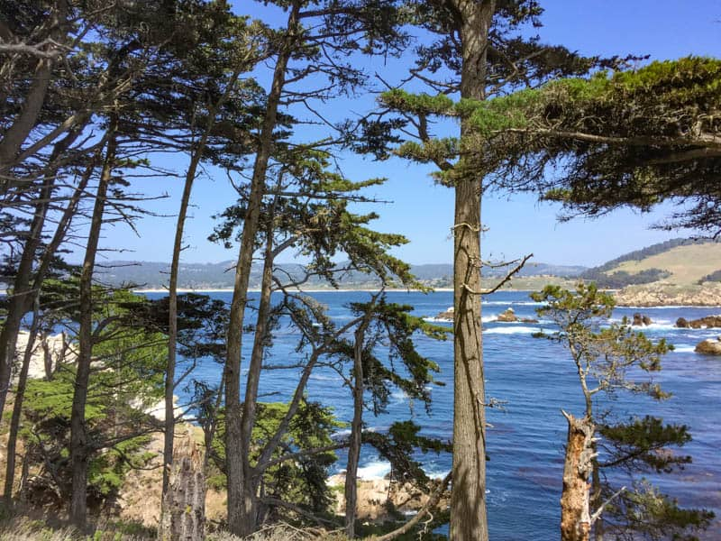 Pacific Ocean from Cypress Grove Trail in Point Lobos