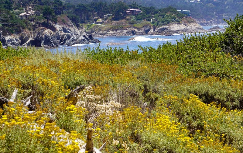 Pelican Point Point Lobos Carmel California