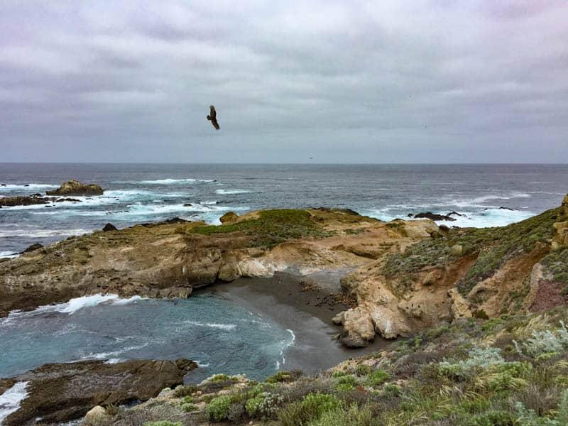 Raptor flying at Point Lobos in Carmel