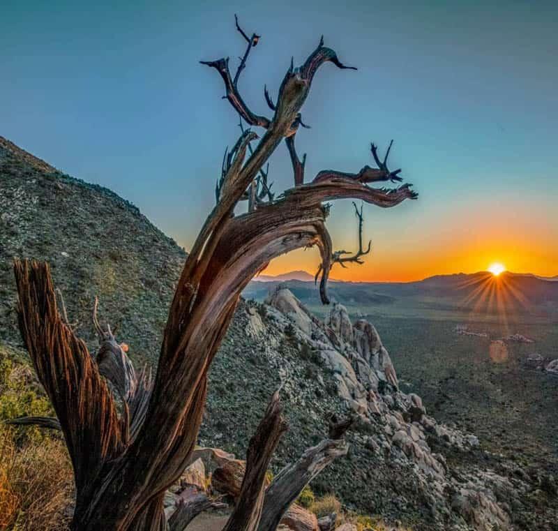 Sunset from Ryan Mountain Trail Joshua Tree NP