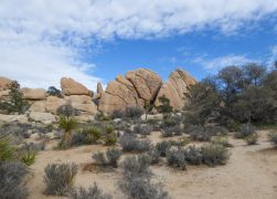 20 Best Things to Do in Joshua Tree National Park (+ Tips for Visiting)