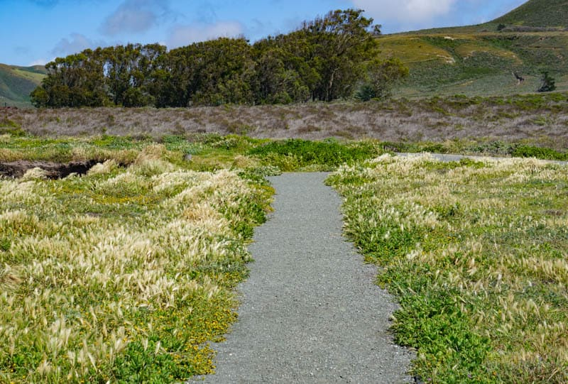 Trail at Montana de Oro State Park