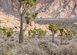 Joshua Tree National Park: Where to Stay