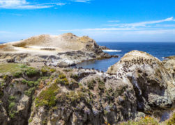 Bird Island Trail in Point Lobos State Reserve: A Beautiful Walk!