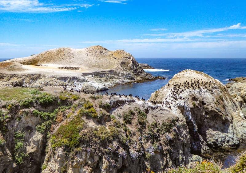 Bird Island Trail in Point Lobos State Reserve in Carmel California