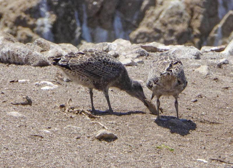 Birds on Bird Island in Point Lobos State Park