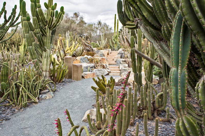 Cactus Stairs Lotusland Montecito California