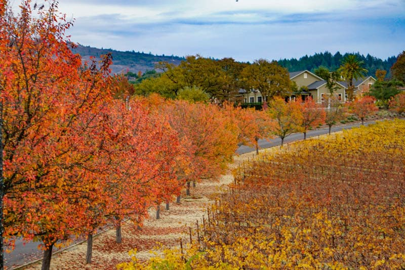 Fall in Napa Valley California
