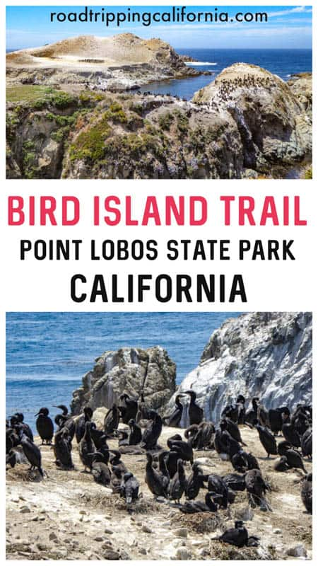 Discover what to expect on the Bird Island Trail in Point Lobos State Reserve in Carmel California. Plus tips for hiking the trail!