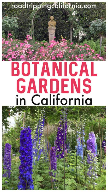 Check out all the gorgeous gardens in California you must visit! From north to south, the best botanic gardens and estates in California to visit if you love gardens!