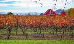 30+ Exciting Things to Do in Napa Valley Besides Wine!