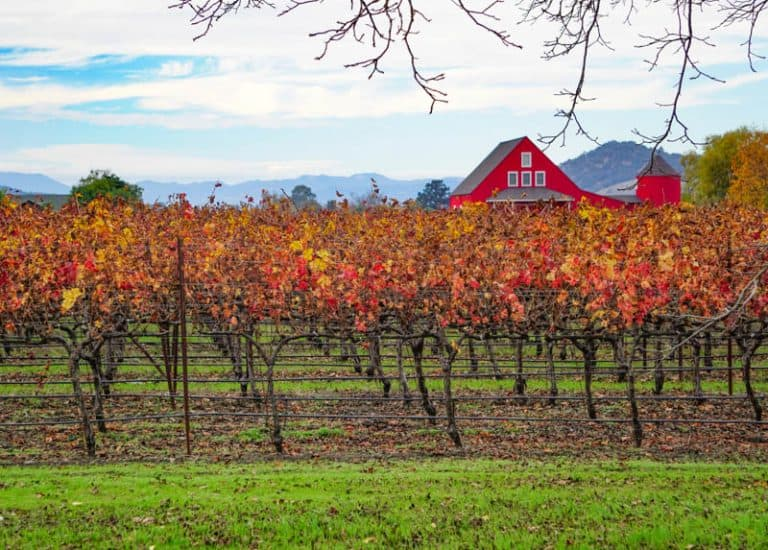 Best Things to Do in Napa Valley Besides Wine!