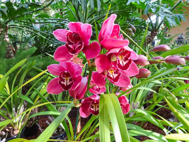 Orchids Botanical Building Balboa Park San Diego California