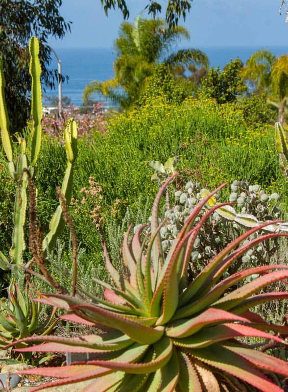 San Diego Botanic Garden Encinitas California