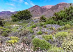 25 Stunning California State Parks You Must Visit (+ Map!)