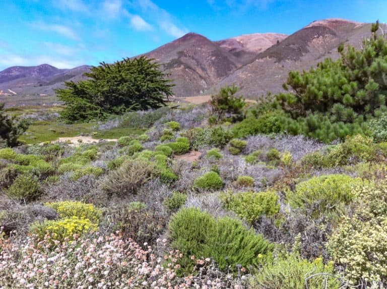 The Best State Parks in California