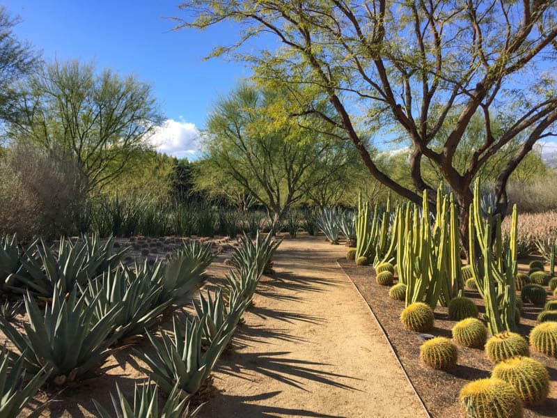 Sunnylands Desert Garden in Rancho Mirage California