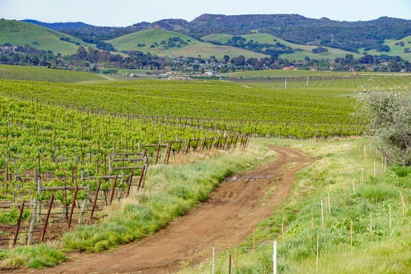 Vineyards San Luis Obispo California