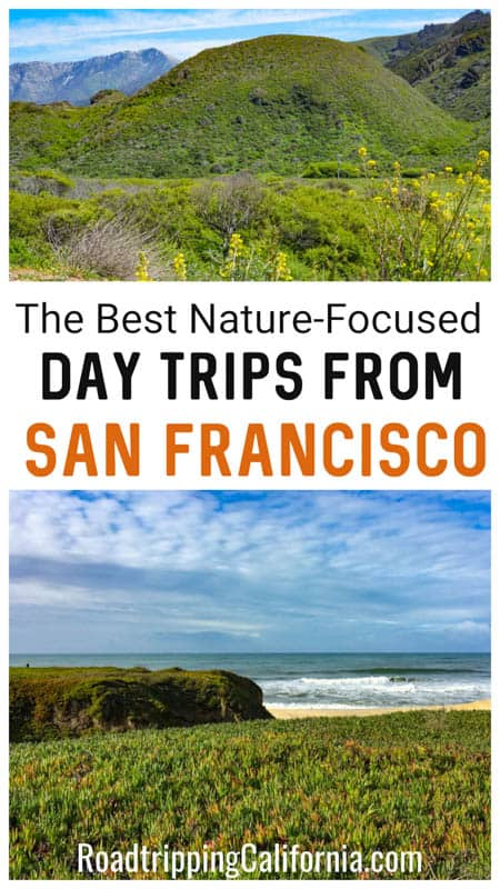 Discover the best nature-focused day trips from San Francisco! Enjoy hiking, beach time, scenic drives, and wildlife viewing to the north, east, and south of the City by the Bay!