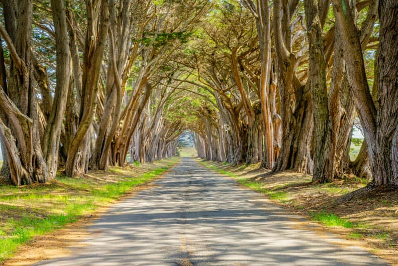 Cypress Tunnel Point Reyes National Seashore California