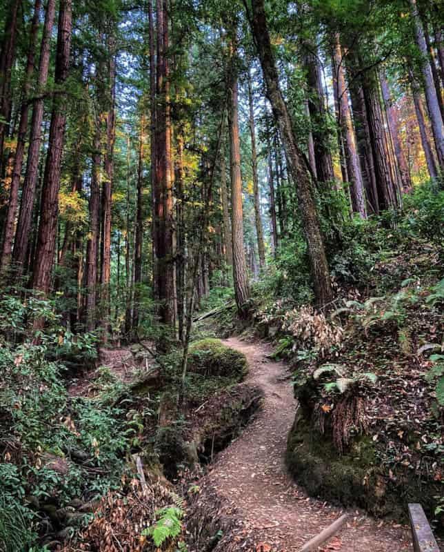 Henry Cowell State Park Santa Cruz California