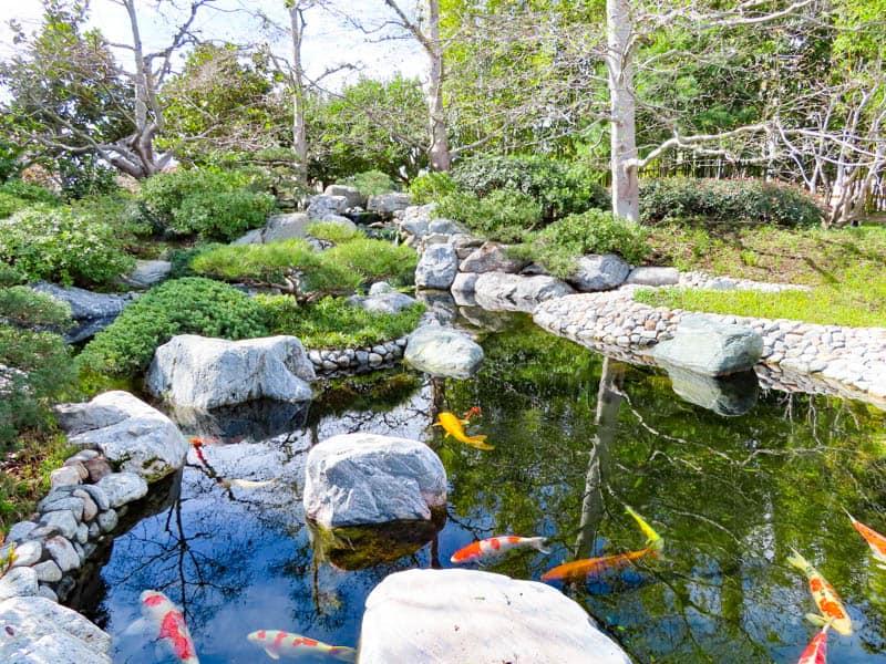 Koi Pond Japanese Garden Balboa Park San Diego