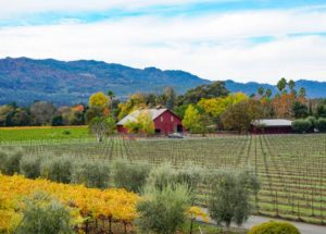 8 Best Airbnbs in Napa Valley for an Incredible Wine Country Getaway!