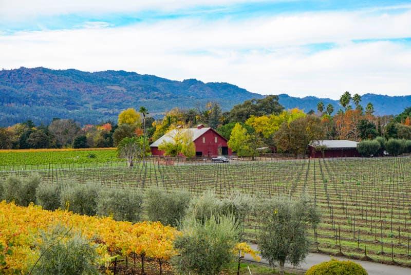 Napa Valley in November