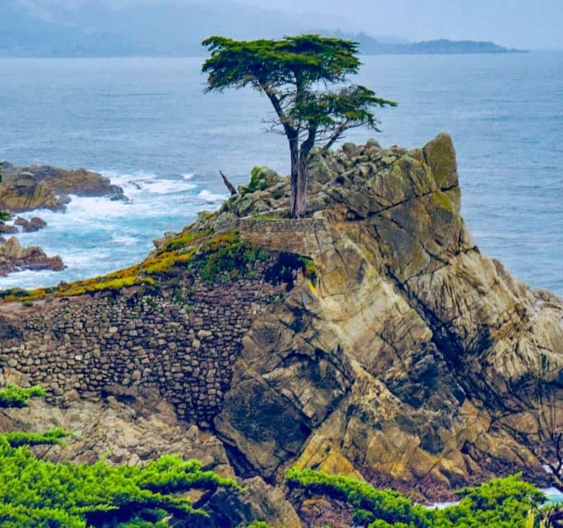The Lone Cypress Pebble Beach California