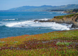 13 Fun Things to Do in Cambria