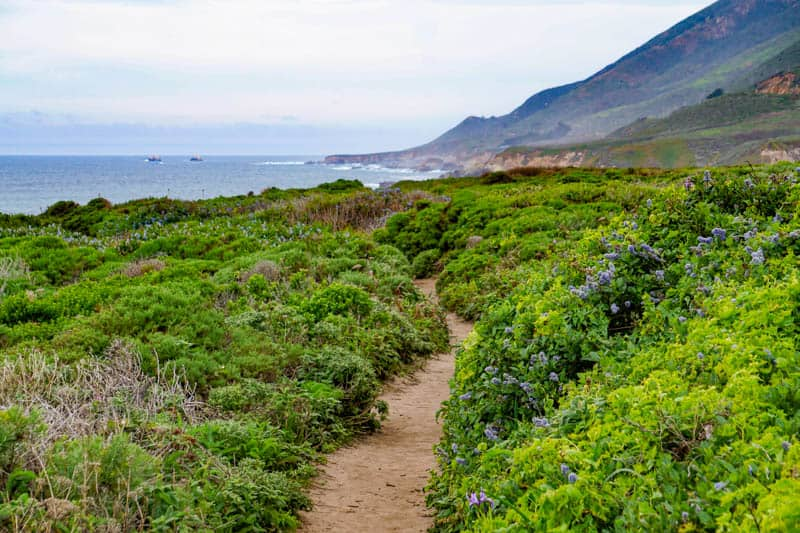 Trail in Garrapata State Park Big Sur California