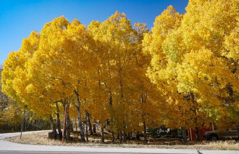 Aspendell California in the fall