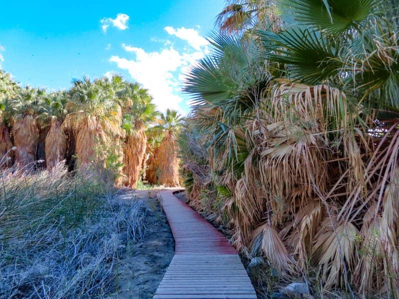 Boardwalk Trail at Thousand Palms Oasis Coachella Valley Preserve California